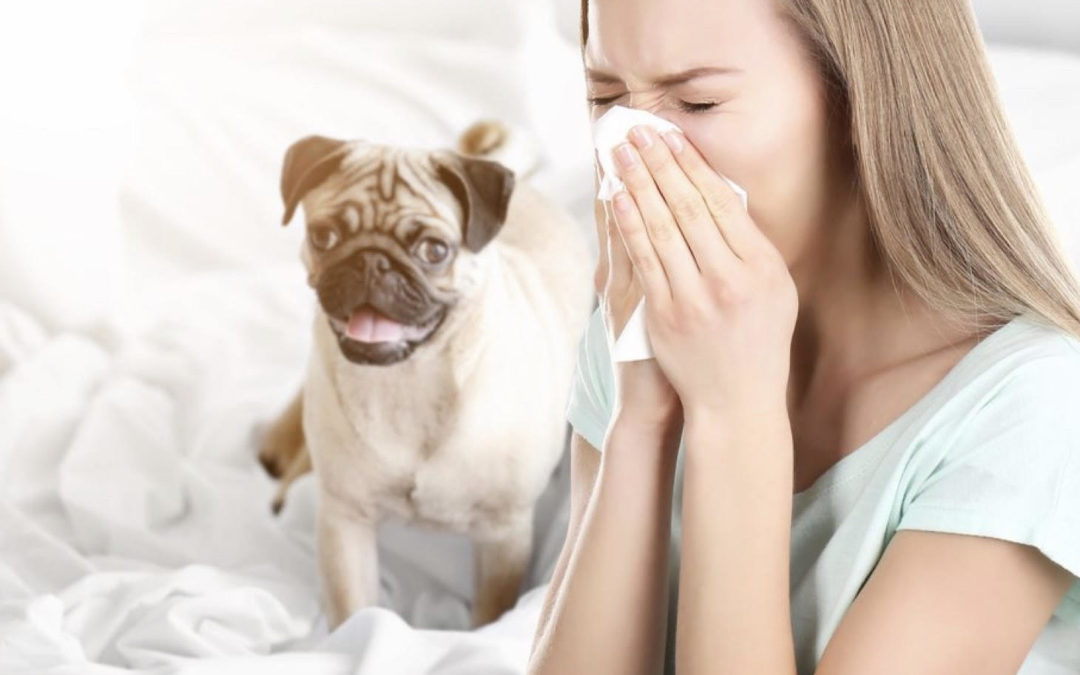 Calling All Pet Owners! IAQ Tips for Pet Owners